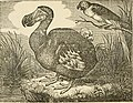 The history of birds - their varieties and oddities, comprising graphic descriptions of nearly all known species of birds, with fishes and insects, the world over, and illustrating their varied (14563792248).jpg