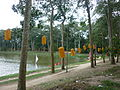 The natural beauty of the countryside Tra Vinh . . . ..JPG