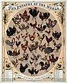 The poultry of the world, 1868.jpg