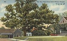 tree that owns itself wikipédia a enciclopédia livre