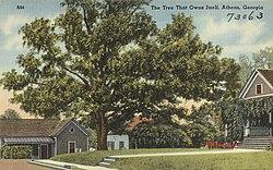The tree that owns itself, Athens, Georgia (8342838973).jpg