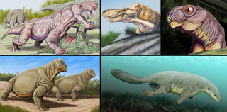 Therapsid Order of tetrapods (fossil)