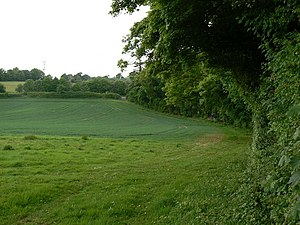 Three Shades of Green Looking along the field ...