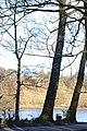 Three trees - geograph.org.uk - 319082.jpg