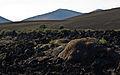 Timanfaya National Park IMGP1835.jpg