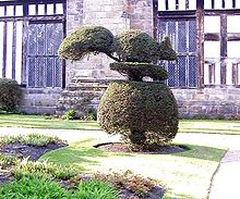 Topiary Rufford Hall.JPG