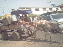 Transporte animal en Maracaibo.JPG