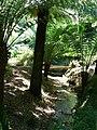 Tree Fern Glade, Trengwainton Garden - geograph.org.uk - 236487.jpg