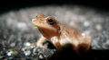 Treefrog in the street (5857691114).png