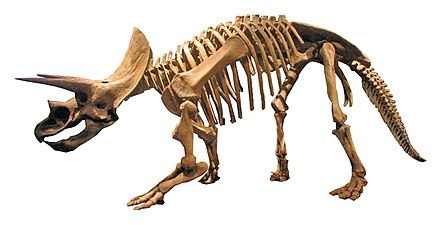 Triceratops-0060w2.jpg
