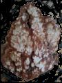 Tufa Mineral.png