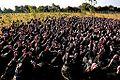 Turkeys on pasture at an organic farm.jpg
