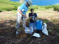 USFWS Getting ready to weigh a Hawaiian petrel chick. Photo credit- George Wallace-American Bird Conservancy (22752349545).jpg