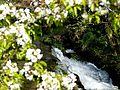 Un rincón del río Almofrey (8674034343).jpg