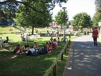 University of Sussex Campus in Summer
