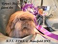 Upton's Butter, Mini Lion Lop.jpg