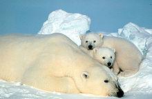 Uma mãe e seus dois filhotes.