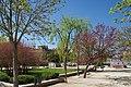 VIEW , ®'s - DiDi - RM - Ð 6K - ┼ , MADRID PARQUE de PEÑUELAS JARDÍN - panoramio (114).jpg