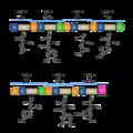 Vancomycin Modules.png