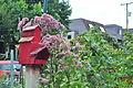 Vancouver, BC - Cypress Community Garden 13 (9632292436).jpg