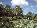 Vegetacion en Valle Mar Juan Griego.JPG