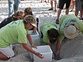 Very Detailed Protocol Required for Sea Turtle Nest Transfer (4804355049).jpg