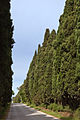 Viale dei Cipressi.jpg