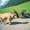 Viehscheid Ramsau 02.jpg