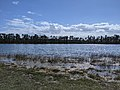 View from lakeside Everglades.jpg