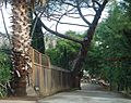 View of driveway and house and tree in hill near San Jose California.JPG