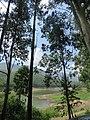 Views around Munnar, Kerala (66).jpg