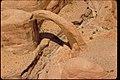 Views of Glen Canyon National Recreation Area, Arizona and Utah (ed58f51d-620d-40fa-94bd-763798f2f1bb).jpg