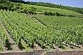 Vineyards Urzig jun 2018 (1).jpg