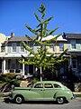 Vintage automobile on Capitol Hill.jpg