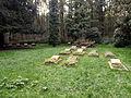 Waldfriedhof Bodelschwingh 17.09.2014 14-31-07.jpg