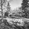 wandelbos in de kloostertuin, de voormalige economietuin, met beeld van maria met het kindje jezus - simpelveld - 20329810 - rce