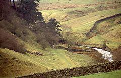 Il paesaggio presso Haltwhistle Burn, a nord di Haltwhistle