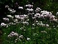 Warsaw, Botanical Garden (7).jpg