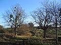 Western end of 'Steel's Riding', Grimsthorpe Park - geograph.org.uk - 289609.jpg