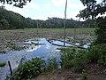 Wetlands of Calvert Cliffs State Park 05.jpg