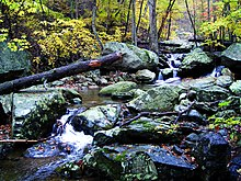 Photo of tree covered stream in mountains