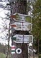 Wik Puszcza Wkrzańska szlak ziel fragm SDC14527.jpg