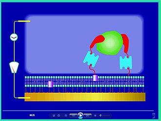 Biosensor - ICS – channel closed