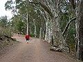 Wilpena Pound, Flinders Range - panoramio - Frans-Banja Mulder (1).jpg