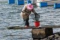 Woman fishing for shore crabs 6.jpg