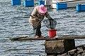 Woman fishing for shore crabs 6.jpg