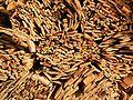 Wood 02 ies.jpg