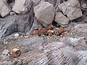 Wood in Petrified Forest National Park.jpg