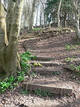 Wooden faced steps - geograph.org.uk - 1807772
