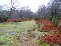 Woodland glade near Hale - geograph.org.uk - 1639669.jpg